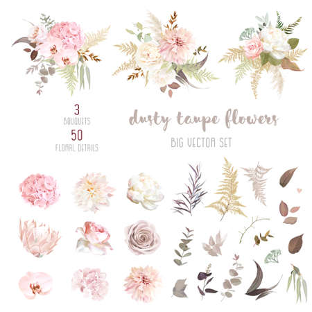 Dusty pink and ivory beige rose, pale hydrangea, peony flower, fern, dahlia, ranunculus, protea, fall leaf big vector collection. Floral pastel watercolor style wedding bouquet. Isolated and editable 스톡 콘텐츠