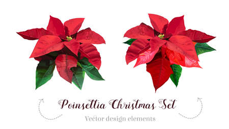 Christmas red poinsettia vector design set 일러스트