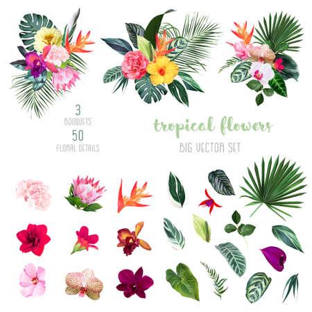 Exotic tropical flowers, orchid, strelitzia, hibiscus, protea, anthurium, palm, monstera