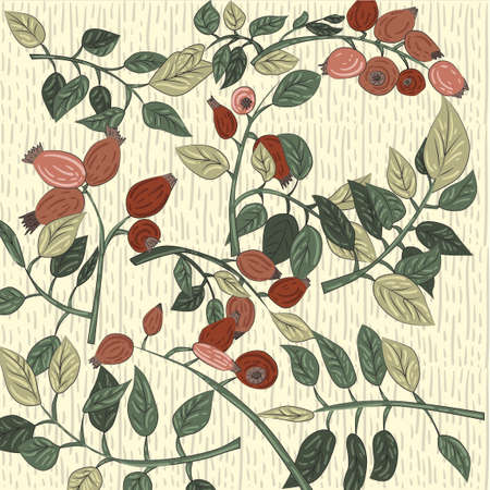 vector color pattern with rose hip fruits and leaves