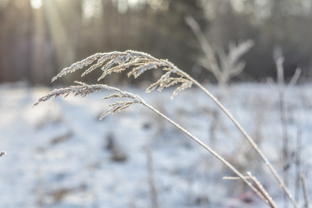 coldness: Hoar on the grass
