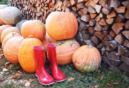 Autumn pumpkin red rain shoes and wooden background.