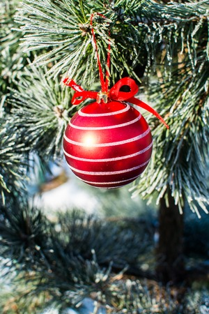 close up of christmas decorations big red ball on xmas tree outdoor stock photo
