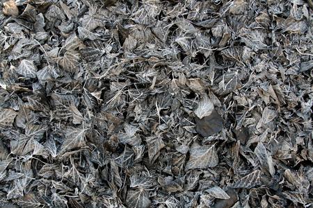 burnt: Burnt leaves