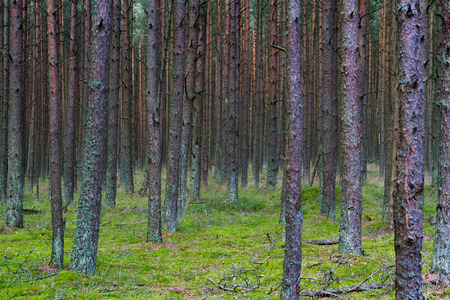 to spit: Dancing Forest on the Curonian Spit