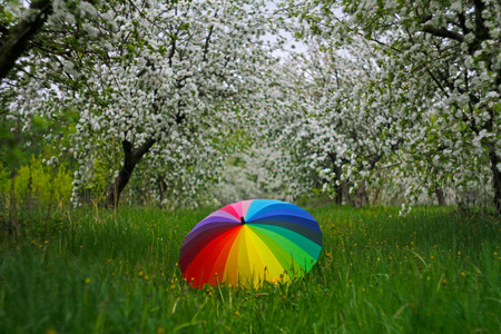 Colorful umbrella lying on green grass on the background of flowering trees in springtime Фото со стока