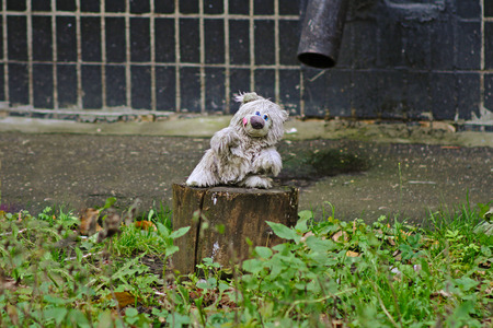 stuff toy: Abandoned soft toy bear in the yard