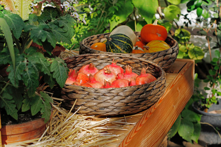 Grenades and little colorful pumpkins in wicker baskets