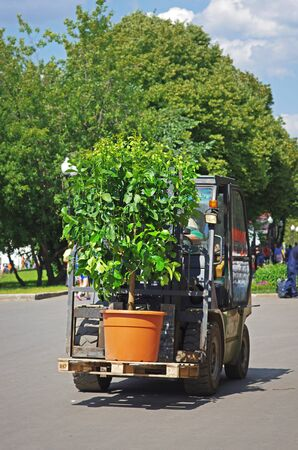 Russia, Moscow - June 15, 2013: Loader transporting the plant on a pallet in park Gorkogo in Moscow