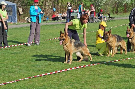 Volzhsky (Volgograd region), Russia - May 02, 2009: German shepherd dogs and their owners at the dogs exhibition in Volzhsky