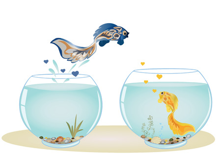 Fish in love jumping to other aquarium to his beloved. Romantic feeling concept.