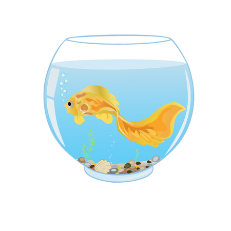 Goldfish swims in the aquarium on a white background. All objects are grouped. Ilustração