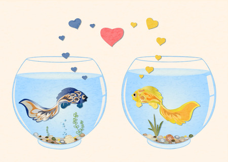 Two cute fish  in love, they are swimming in different aquariums, look at each other.