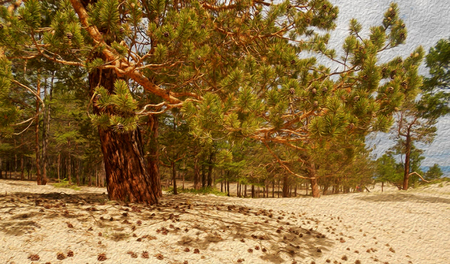 Landscape of pine forest on sand beach of bay. Coniferous tree close-up on golden sandy shore of sea.