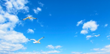 Seagulls hovering in the blue sky with clouds. Gulls flying in heaven. Background with place for your text. Stock Photo