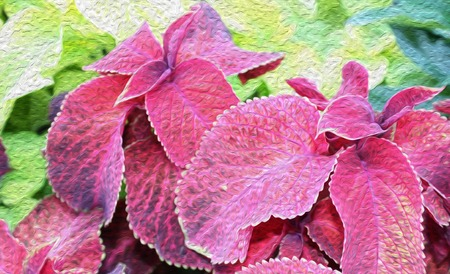Nature  from the leaves of Houseplant Coleus. Фото со стока