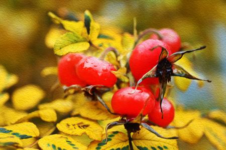 Image rosehip of yellow autumn leaves. Фото со стока
