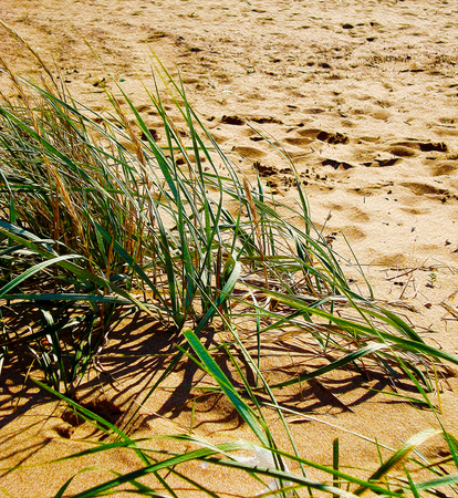 Green grass on a  of sand