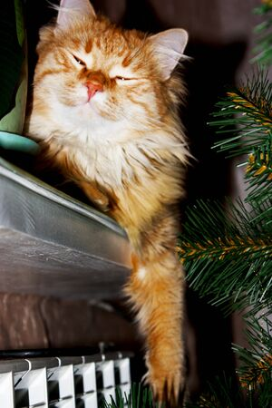 Curious ginger cat sitting on windowsill plays with branches artificial christmas tree.