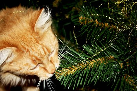 Photo of curious ginger cat playing among branches artificial christmas tree. Фото со стока - 131424511