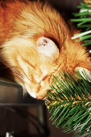 Curious ginger cat sitting on windowsill plays with branches artificial christmas tree. Fluffy red domestic kitty among holiday decorations creates mood of Christmas concept. New year theme.