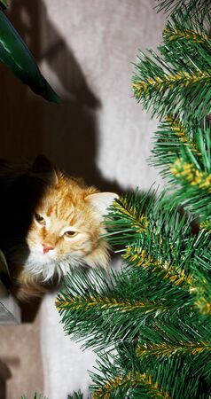 Curious ginger cat sits on windowsill next to branches artificial christmas tree. Fluffy red domestic kitty among holiday decorations creates mood of Christmas concept. New year theme.