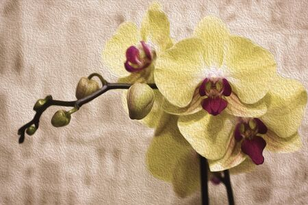 Branch of blooming Orchid on abstract light brown background. Yellow with purple flower of Phalaenopsis. Illustration imitates oil painting.