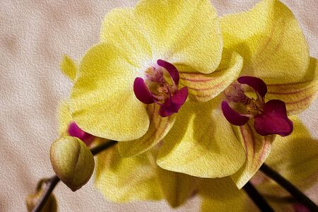 Branch of blooming Orchid on abstract light brown background. Yellow with purple flower of Phalaenopsis. Illustration imitates oil painting. Close up. 免版税图像