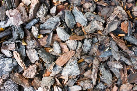 Beautiful woody background. Natural brown backdrop of shredded pieces of tree bark. Texture crushed fragments bark of wood.