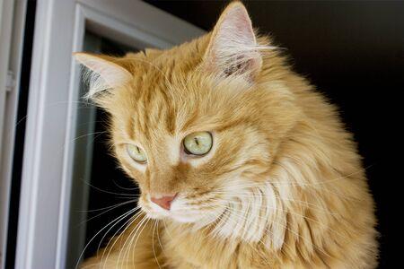 Portrait of red kitten cat sitting on window Stok Fotoğraf