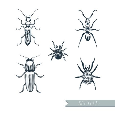 Set insects beetles, ants, hand-drawn. Graphics. Vector. Иллюстрация