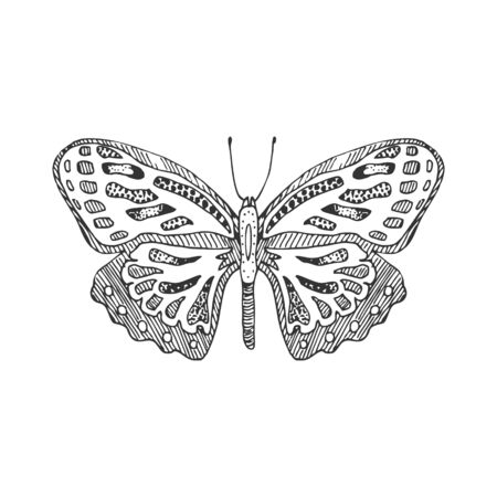 Hand draw butterfly. Isolated on white vector ilustration.