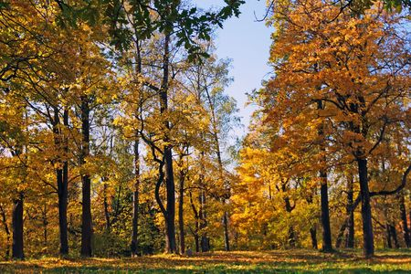 Autumn park  near St.Petersburg, Russia