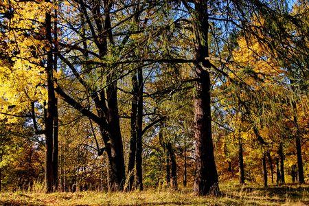 Autumn forest  near St.Petersburg, Russia