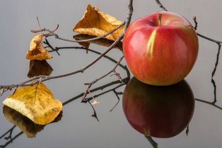 striped red Apple with yellow autumn leaves and a branch on black glass