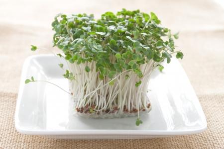 broccoli sprouts: Broccoli sprouts on white plate Stock Photo