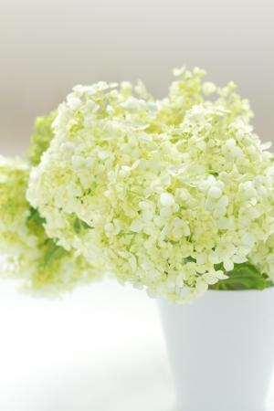 White Hydrangea in vase photo