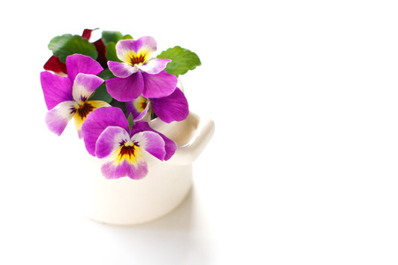 beautiful viola in vase photo