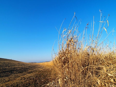 desolate: desolate field