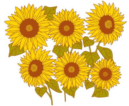 sunflower pattern vector  Illustration