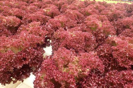 Close up of organic salad - soft focus, shallow of depth and slight blur.