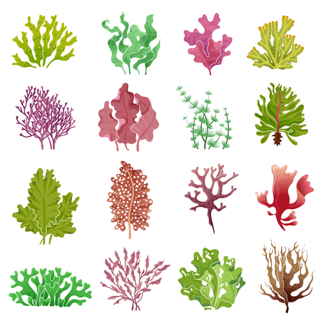 Seaweed set. Sea plants, ocean algae and aquarium kelp. Underwater seaweeds vector isolated set