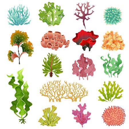 Coral and seaweed. Underwater flora, sea water seaweeds aquarium kelp and corals. Ocean plants vector illustration set