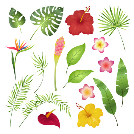 Tropical flowers and leaves. Caribbean tropical flower leaf hibiscus orchid hawaii exotic, garden jungle summer botanical vector illustration Imagens - 116391592