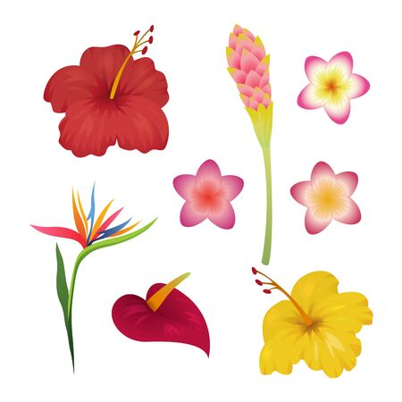 Tropical flower set. Tropic flowers fashion print. Hawaii caribbean polynesian bali indonesia plant garden Иллюстрация