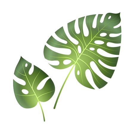 Monstera tropical leaves. Jungle palm plants exotic beautiful big green leaf painting