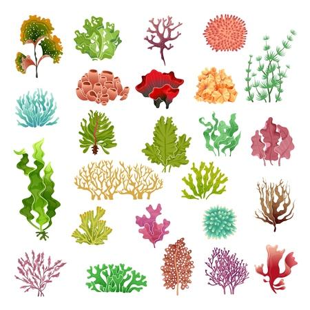 Coral and seaweed. Underwater flora, sea water seaweeds aquarium game kelp and corals. Ocean plants vector color set