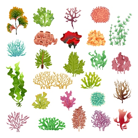 Coral and seaweed. Underwater flora, sea water seaweeds aquarium game kelp and corals. Ocean plants vector color set Ilustração