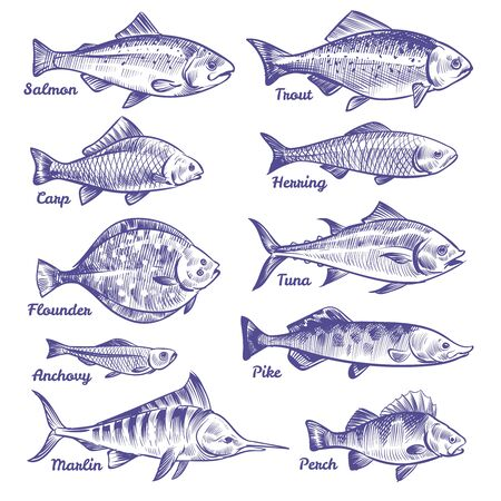 Hand drawn fishes. Ocean sea river fishes sketch fishing seafood herring tuna salmon anchovy trout perch pike, vector collection