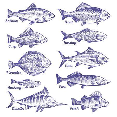 Pesci disegnati a mano. Oceano mare fiume pesci schizzo pesca frutti di mare aringa tonno salmone acciughe trota persico luccio, vettore collection